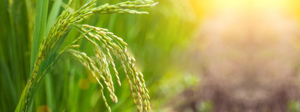 Malaxmi Agribusiness
